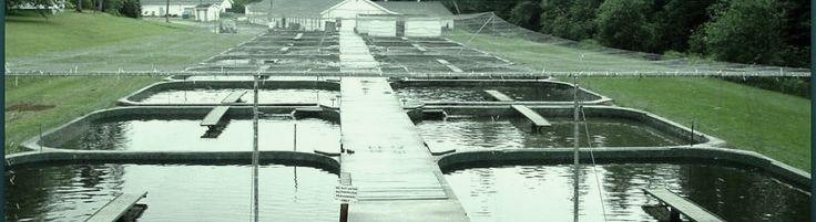 Aquaculture Hydraulic/Hydrostatic Repair